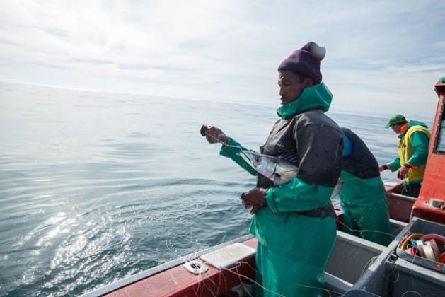 Pescadores atrapando barracudas, un pez de crecimiento relativamente rápido. Crédito: Mark Chipps/WWF.