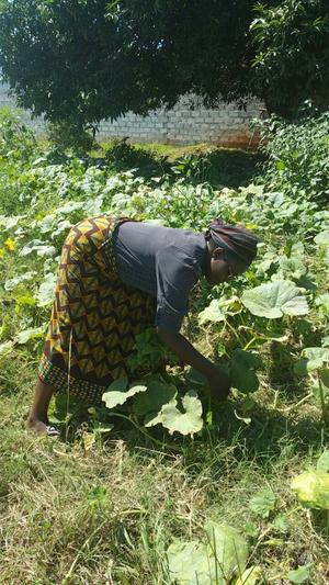 Mary Nyirenda en la huerta que tiene en su terreno de Livingstone, Zambia. Crédito: Friday Phiri/IPS.