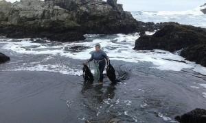 Zulema Muñoz sale del mar cargando dos matas de cochayuyo, que acaba de arrancar de las rocas a las que se adhiere, en la costa del océano Pacífico, a las afueras del pueblo de Matanzas. Las algas marinas ganan terreno en el sector pesquero de Chile y son el sustento de miles de personas. Crédito: Orlando Milesi/IPS