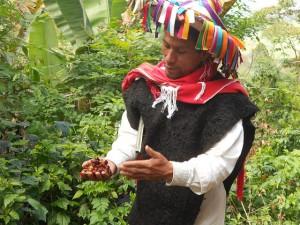 Un campesino indígena muestra los granos de café autóctonos que cultiva, en el sureño estado de Chiapas, en México. El reparto de los beneficios por el aprovechamiento de recursos genéticos se ha transformado en un tema polémico en América Latina. Crédito: Emilio Godoy/IPS