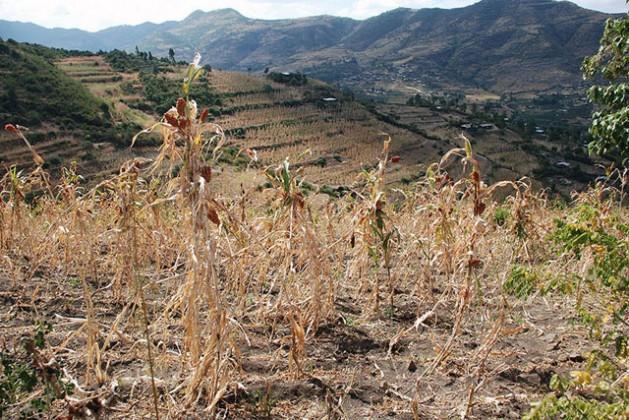 La región de Hararghe occidental, en Etiopía, en diciembre de 2015. Unas 10.2 millones de personas sufren inseguridad alimentaria en el marco de una de las peores sequías registradas en ese país africano en décadas. Crédit: WFP/Stephanie Savariaud.