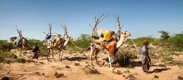 La degradación de los suelos y la gestión sostenible de la tierra: No hangan nada y será más pobres. Crédito: PNUMA.