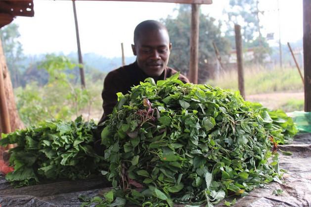 Los pequeños agricultores prosperan si tienen acceso al conocimiento y al empleo de insumos, como los fertilizantes y el crédito. Crédito: Busani Bafana / IPS