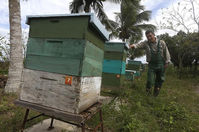 El agrónomo y ecologista Fernando Funes, junto a las colmenas para la elaboración de miel orgánica de la Finca Marta, en un municipio cercano a La Habana. Explotaciones agrícolas como la de Funes crean cadenas de producción y de valor que inyectan savia nueva al campo de Cuba. Crédito: Jorge Luis Baños/IPS