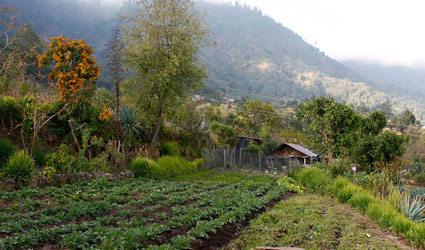 Una finca de San Luis, en Guatemala. Crédito: FAO Guatemala