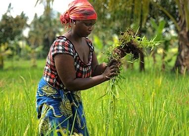 La agricultura climáticamente inteligente es una estrategia que ayuda a guiar las acciones necesarias para transformar y reorientar los sistemas agrícolas con el fin de apoyar el desarrollo y garantizar la seguridad alimentaria en un clima cambiante. Crédito: FAO