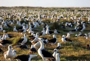 El Congreso Mundial de la Naturaleza, organizado por UICN en Hawái definiría propuestas y medidas concretas relacionados a los ODS y el Acuerdo de París.