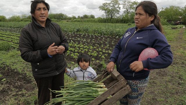 Olga Campos (izquierda), su nieto Jhonny y Limbania Limache, en la parcela de tres hectáreas que arriendan y cultivan hortalizas orgánicas en El Pato, en el sur del Gran Buenos Aires, a 44 kilómetros de la capital de Argentina. Llueva, haga frío o calor, ellas trabajan en su huerta cada día. Crédito: Guido Ignacio Fontán/IPS