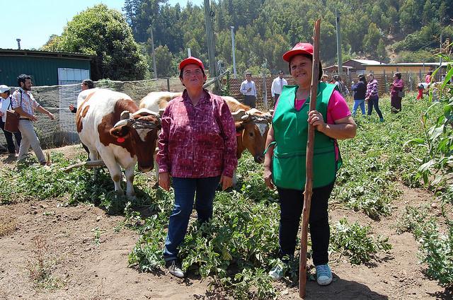 Dos productoras agropecuarias, en la localidad de Cobquecura, en el centro de Chile, muestran a visitantes cambios en sus siembras de subsistencia para enfrentar el incremento de la temperatura en el planeta, con el apoyo de políticas públicas a favor de la seguridad alimentaria en tiempos de cambio climático. Crédito: Claudio Riquelme/IPS https://c1.staticflickr.com/9/8639/30240913235_109970bb1c_o.jpg