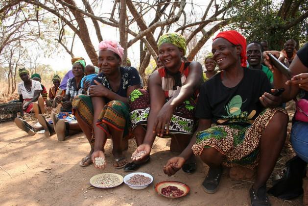 Tres agricultoras muestran orgullosas parte de su cosecha en una aldea vecina de la capital de Zambia. Las legumbres son buenas para la nutrición y como fuente de ingresos, en particular para las mujeres, responsables de la seguridad alimentaria de los hogares. Crédito: Busani Bafana/IPS.