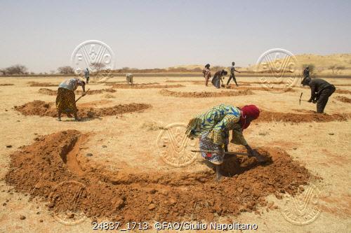Mujeres trabajan en Níger preparando el suelo para la próxima estación de lluvias haciendo diques con forma de medialuna para ahorrar agua. Crédito: Giulio Napolitano/FAO.