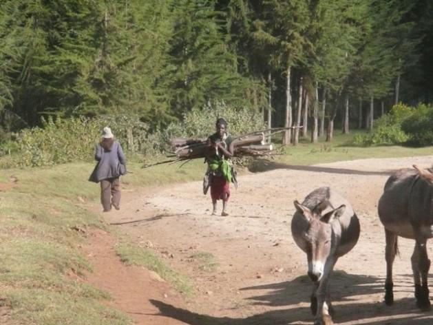 El acceso justo y reglamentado al Parque Nacional del Monte Kenia ayuda a desactivar tensiones entre las comunidades vecinas que compiten por los recursos naturales del bosque. Crédito: Anna Manikowska Di Giovanni