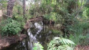 América Central sufre una acelerada pérdida de su rica cobertura forestal. Crédito: FAO