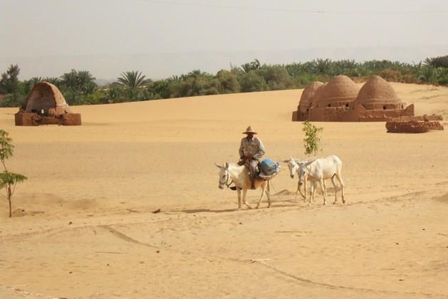 La capa freática está descendiendo en los oasis del desierto de Egipto, lo que genera problemas de sostenibilidad. Crédito: Cam McGrath / IPS