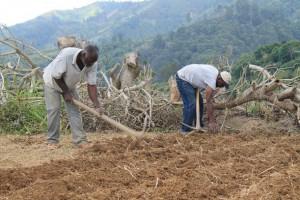 Los científicos del Caribe utilizan macrodatos para elaborar pronósticos sobre las condiciones de sequía para los agricultores y otros intereses del sector. Crédito: Zadie Neufville/IPS.