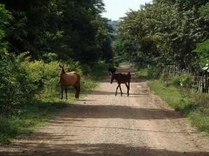En abril de 2017, tres años después de la apertura de este camino como el comienzo oficial de la construcción del Gran Canal Interoceánico de Nicaragua, en Brito, en el extremo del megaproyecto en la costa occidental del océano Pacífico, la vía está abandonada y es utilizada por caballos de fincas vecinas. Crédito: José Adán Silva/IPS