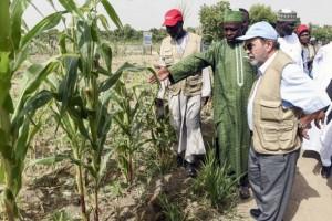 En la Cuenca del lago Chad estalló una crisis derivada del hambre, la pobreza y la falta de desarrollo rural. Crédito: FAO.
