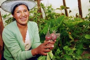 La joven agricultora Jhaneth Rojas muestra unos rábanos cosechados en el huerto familiar tipo invernadero, llamado localmente carpa solar, en la aldea de Phuyuwasi, en los valles interandinos del departamento de Cochabamba, en Bolivia. Crédito: Franz Chávez/IPS