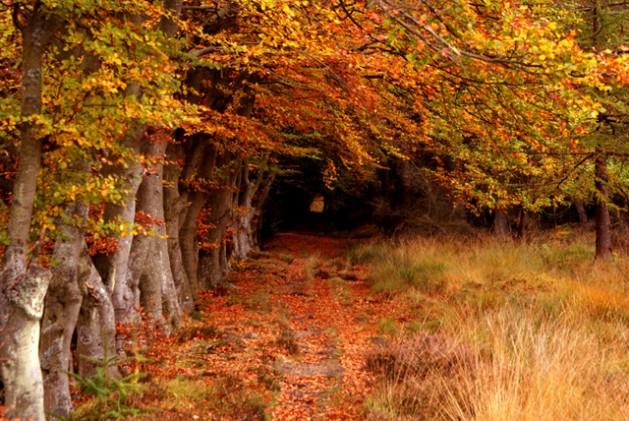 El bosque de Selm Muir, en el concejo de West Lothian, Escocia. Crédito: Robert Clamp/UN Photo.