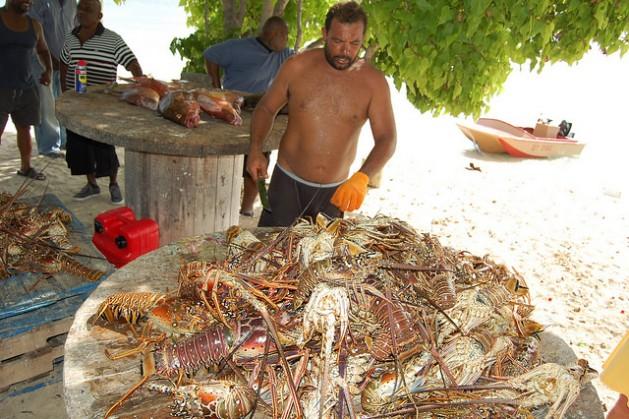 En Islas Turcas y Caicos, el gobierno busca nuevas formas de gestionar las poblaciones de caracolas y ostras. Crédito: Zadie Neufville/IPS.