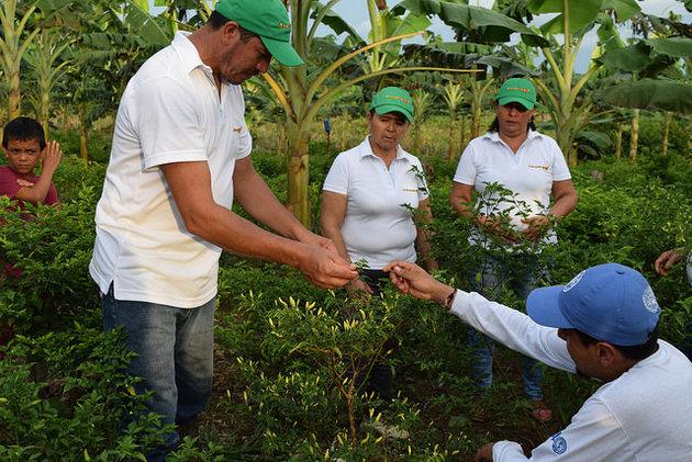 La FAO trabajará con la Agencia de Desarrollo Rural de Colombia para desarrollar planes y proyectos de desarrollo rural con un enfoque territorial integral. Crédito: FAO