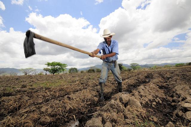 Un agricultor de maíz en Alauca, Honduras, crea canales de irrigación antes de sembrar la próxima cosecha. Crédito: Neil Palmer/CIAT