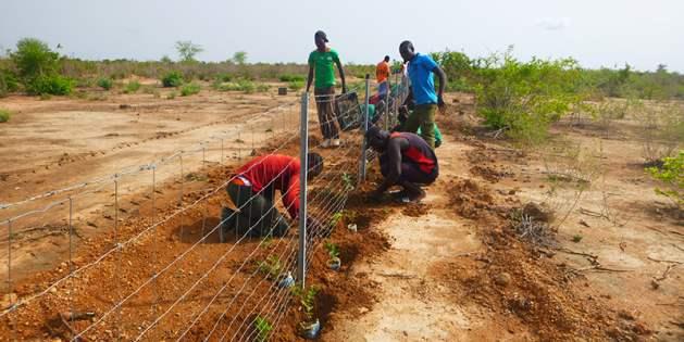 En Burkina Fasso se plantan 20.000 árboles para crear una cobertura vegetal. Crédito: UNCCD