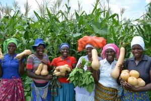 El Programa Mundial de Alimentos apoyó a 95.000 personas en Zimbabwe en 2016 mediante la recuperación o creación de activos comunitarios, como los sistemas de recolección de agua. Crédito: PMA.