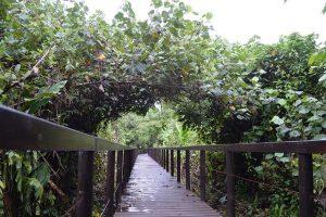 En el Parque Nacional Cahuita, en la suoriental provincia de Limón, en Costa Rica, las autoridades construyeron un paso elevado por el bosque para mostrar la riqueza natural y para evitar el vulnerable camino costero que el mar caribeño socava. Crédito: Diego Arguedas Ortiz / IPS