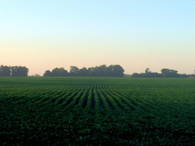 Una plantación de soya de un país sudamericano. Crédito: FAO