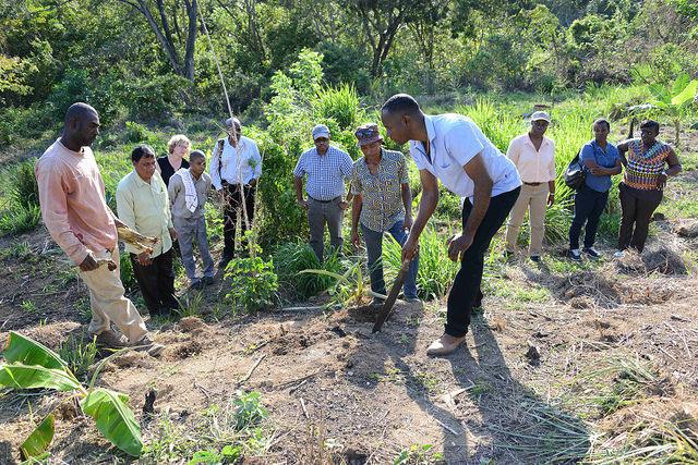 Agricultores del Caribe han tenido que hacer frente en los últimos años a sequías extremas, que son la princial causa de la inseguridad alimentaria en los países en desarrollo. Crédito: Desmond Brown/IPS.