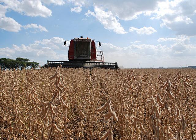 La cosecha de soja de este año en Brasil va a alcanzar cifras récord y reafirmar que el país se aproxima a desbancar a Estados Unidos como el mayor productor de la oelaginosa del mundo. Crédito: Embrapa