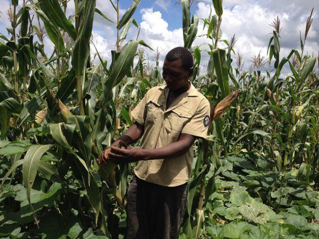 Abshy Nchimunya, del club de agricultores de Kayokela, en el sur de Zambia. Crédito: Friday Phiri / IPS