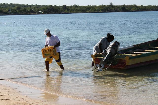 El pescador Ceylon Clayton carga un cajón de algas. Cuando estas crecen, también hay más peces en la localidad de Little Bay, en Jamaica. Este proyecto alternativo para mejorar los ingresos es una de las 14 iniciativas de protección costera implementaradas por el 5Cs. Crédito: Zadie Neufville/IPS.