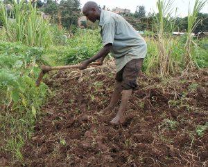 Las reducidas e insuficientes lluvias, así como las plagas que dañan los cultivos amenazan seriamente la base de las economías africanas. Crédito: Miriam Gathigah/IPS.