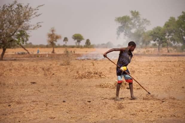 La degradación de tierras, responsable de la emigración de las poblaciones rurales, es un gran problema en Senegal. Crédito: M. Mitchell/IFPRI.