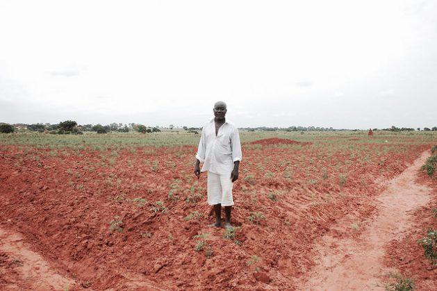 Adolf Ozor, cultiva tomate en la región de Gran Accra, en Ghana, pero sus ingresos no le alcanzan a cubrir sus necesidades tras el aumento de las importaciones de ese producto. Crédito: Daan Bauwens/IPS