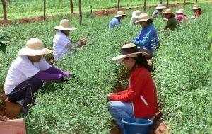 Las mujeres rurales de América Latina son especialmente vulnerables a vivir en pobreza. Crédito: FAO