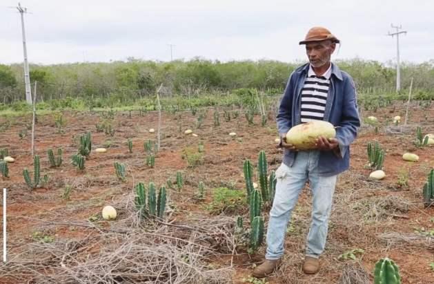 Convivir con la sequía, un modelo que da frutos en el Semiárido de Brasil