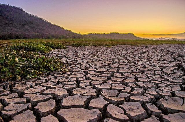 Costa Rica incrementó su cobertura boscosa, pero algunos humedales y zonas al norte del país se afectaron por la deforestación y la sequía. El alto uso agroquímicos y fertilizantes en actividades agroindustriales y la tala en monocultivos vecinos dañó al humedal de Palo Verde y los bosques aledaños. Crédito: Miriet Abrego/IPS