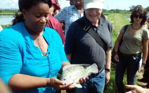La bióloga Lesvia Calderón muestra orgullosa una de las tilapias, cada vez más gordas y grandes, que produce con el apoyo de un proyecto de mejoramiento genético de peces de la FAO. Crédito: FAO Cuba