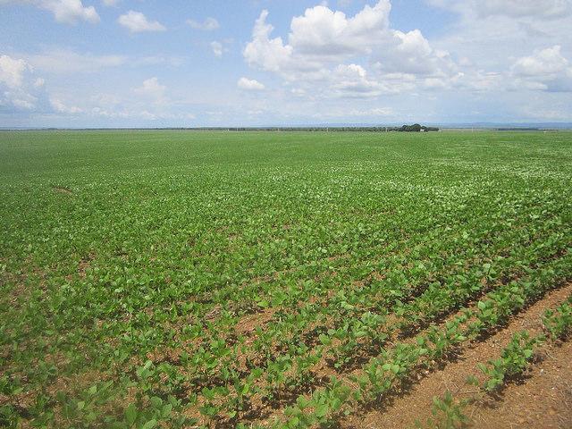 Una plantación de soja en Tocantins, un estado del norte de Brasil, un país que se apresta a ser el mayor productor mundial de la oleaginosa, un monocultivo para el que se han deforestado millones de hectáreas. La agricultura comercial, en especial de ganadería, soja y aceite de palma, son motores claves en la degradación de los suelos latinoamericanos. Crédito: Mario Osava/IPS