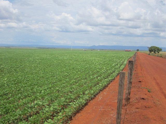 """Una plantación de soja en Tocantins, un estado del centro de Brasil, donde ese monocultivo empieza a ocupar las mejores tierras, siguiendo los pasos del vecino estado de Mato Grosso, el mayor productor y exportador nacional de soja y maíz, que en cambio debe """"importar"""" los alimentos que consume de zonas lejanas. Crédito: Mario Osava/IPS"""