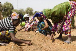 Mujeres africanas cuidan su siembra en los surcos de una tierra degradada. Crédito: CNULD