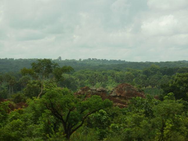 La selva en la zona de Kintampo, en Guinea, ante el dilema de preservar el ambiente y llevar la electricidad a todo los hogares. Actualmente, apenas la cuarta parte de la población de ese país tiene electricidad. Crédito: CC by 3.0