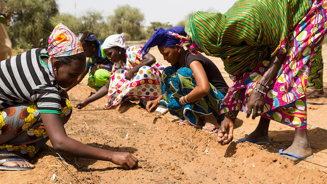 Se espera recuperar 100 millones de hectáreas para 2030 y secuestrar 250 millones de toneladas de carbono. Crédito: Greatgreenwall.org