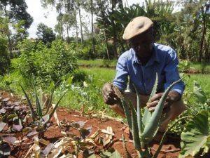 Ibrahim Ndegwa, en una granja en Ngangarithi, Wetlands, en el condado de Nyeri, en el centro de Kenia. A los especialistas les preocupa que los agricultores locales queden al margen de las iniciativas contra la desertificación. Crédito: Miriam Gathigah/IPS.