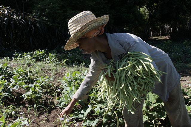La vulnerabilidad de los pobres agricultores y los cultivos con pocos nutrientes han sido hasta ahora algunos de los frenos de la agricultura eficiente. Crédito: Jorge Luis Baños/IPS.