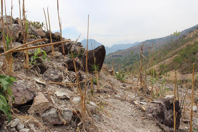 La sequía hace estragos en el Corredor Seco Centroamericano. Crédito: Rubí López/FAO Guatemala