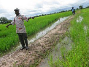 Un arrocero en el norte de Ghana en épocas de bonanza. Las tierras cultivables que otrora fueron fértiles, ahora dejaron de ser productivas, lo que impactó en los ingresos, y las fuentes de agua se secaron por las prologadas sequías. Crédito: Isaiah Esipisu/IPS